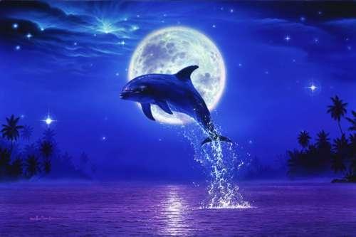 dolfijn en maan